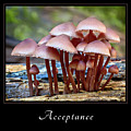 Acceptance 4 by Mary Jo Allen