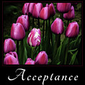 Acceptance by Mary Jo Allen