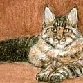 Aceo Maine Coon Cat by Bruce Lennon