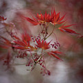 Acer Storm Redux by Mike Reid