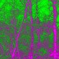 Acid Forest by Alan Hogan