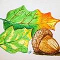Acorn And Leaves by J R Seymour