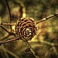 Single Tree Cone At Dusk by John W King