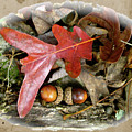 Acorns And Oak Leaves by Mother Nature