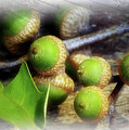 Acorns by Brian Wallace