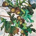 Acorns On An Oak  by Mastiff Studios