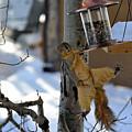 Acrobatic Squirrel by Matt Swinden