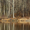 Across Skymount Pond - Autumn Browns by Mother Nature