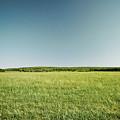 Across The Field by Ryan Kelly