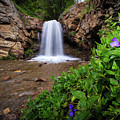 Adams Canyon Lower Falls Spring by Gina Herbert