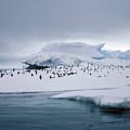 Adelie Penguins On Iceberg Weddell Sea by Brian Lockett