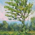 Adirondack Tree by Robert James Hacunda