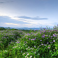Adirondack View 6 by Tony Beaver