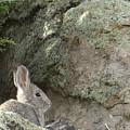 Adobetown Bunny by Christi Chapman