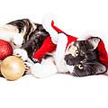 Adorable Christmas Calico Santa Kitty by Susan Schmitz