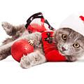 Adorable Christmas Kitten Over White by Susan Schmitz