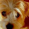 Adorable Daisy by Arlane Crump