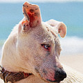 Adorable Small Dog On The Beach by Queso Espinosa