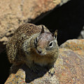 Adorable Up Close Look Into The Face Of A Squirrel by DejaVu Designs