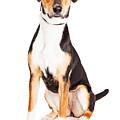 Adorable Young Mixed Breed Puppy Dog by Susan Schmitz