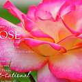 Advice From A Rose by Teri Virbickis