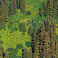Aerial View Of Forest On Mountainside by Panoramic Images