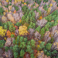 Aerial View Of The Forrest With Different Color Trees.  by Mariusz Prusaczyk