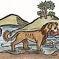 Aesop: Dog & Shadow, 1484 by Granger