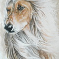 Afghan Hound by Barbara Keith