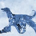 Afghan Hound-blue by Erzebet S