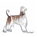 Afghan Hound by Carol Veiga