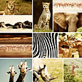 African Animals Safari Collage  by Anna Om