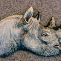African Black Rhino by Dy Witt