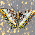 African Butterfly by Mindy Lighthipe