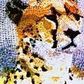 African Cheetah by Paul Lee