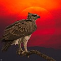 African Eagle At Sunset by Larry Linton