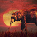 African Elephant by Angela Doelling AD DESIGN Photo and PhotoArt