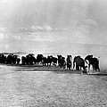 African Elephant Herd by Granger