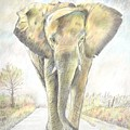 African Elephant by Keith Miller