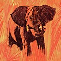 African Elephant On The Plains by Movie Poster Prints