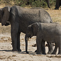 African Elephants Mother And Baby by Sally Weigand