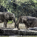 African Elephants_hdr by Michael Rankin