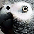 African Gray Parrot Art - Softy by Sharon Cummings