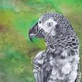 African Grey Parrot by Katherine Klimitas