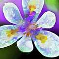 African Iris Abstract  by Kay Brewer