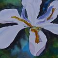 African Iris by Warren Thompson