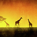 African Landscape by Giordano Aita