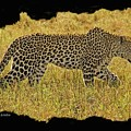 African Leopard 7 by Larry Linton