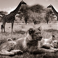 African Life by Christine Sponchia
