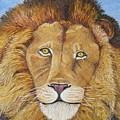 African Lion by Karen Desrosiers